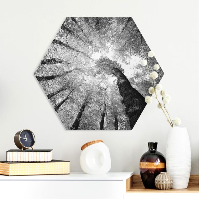 Hexagon Bild Forex - Bäume des Lebens II