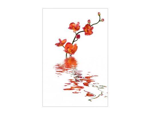 Fensterfolie - Sichtschutz Fenster Flamy Orchid Waters - Fensterbilder