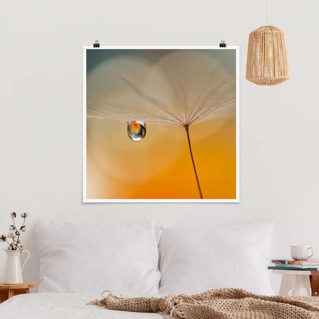 Poster - Pusteblume in Orange - Quadrat 1:1