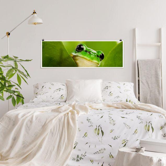 Poster - Wetterfrosch - Panorama Querformat