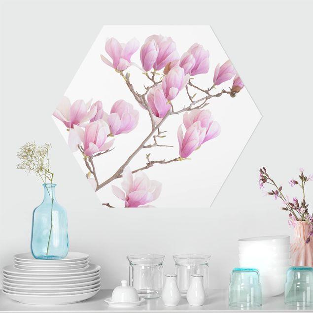 Hexagon Bild Forex - Magnolienzweig