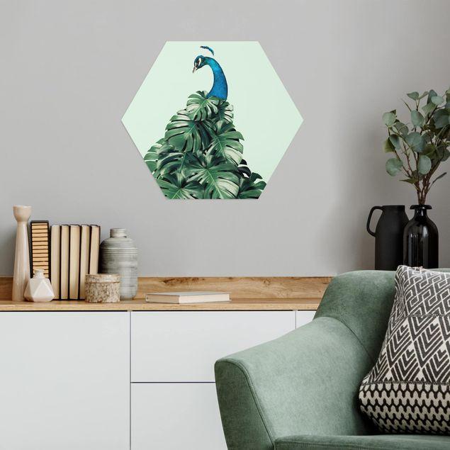 Hexagon Bild Alu-Dibond - Jonas Loose - Pfau mit Monstera Blättern