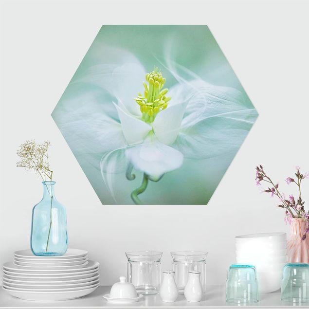 Hexagon Bild Forex - Weiße Akelei