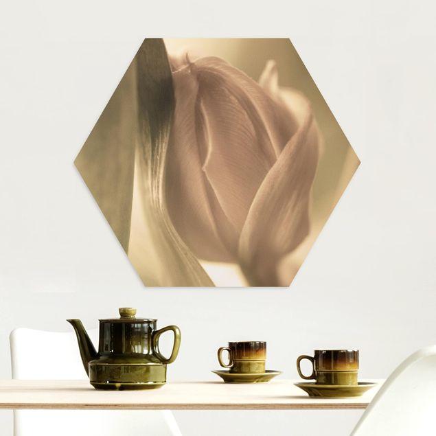 Hexagon Bild Alu-Dibond - Zarte Tulpen