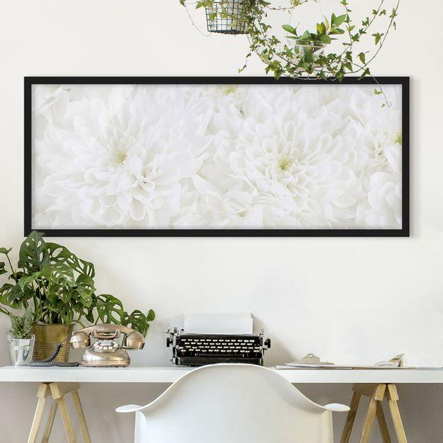 Bild mit Rahmen - Dahlien Blumenmeer weiß - Panorama Querformat