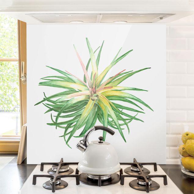 Glas Spritzschutz - Luftpflanze Aquarell III - Quadrat - 1:1