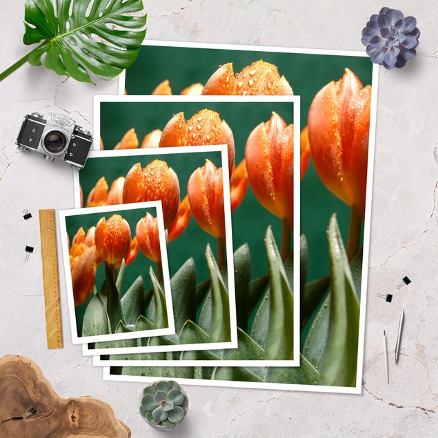 Poster - We are Tulip - Hochformat 3:4