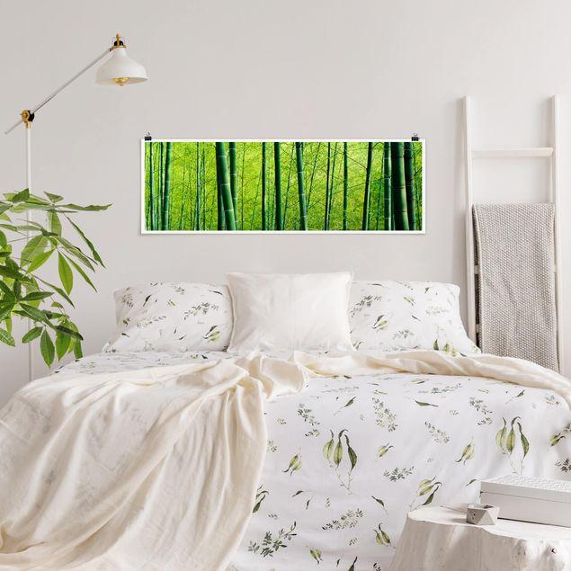 Poster - Bambuswald - Panorama Querformat
