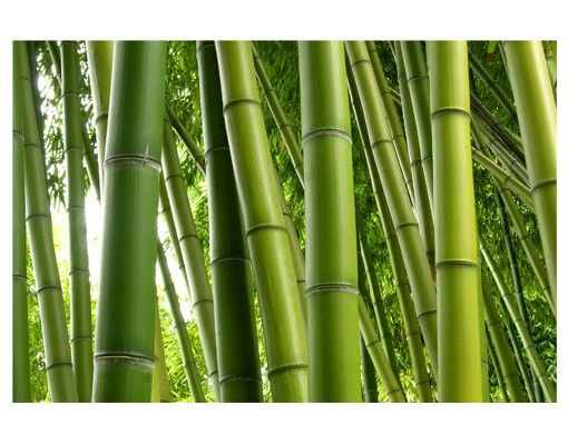Fensterfolie - Sichtschutz Fenster Bamboo Trees No.1 - Fensterbilder