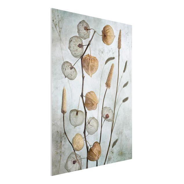 Forex Fine Art Print - Lampionfrüchte im Herbst - Hochformat 4:3