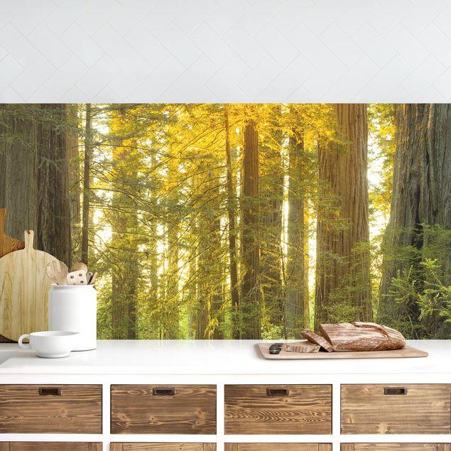 Küchenrückwand - Redwood National Park