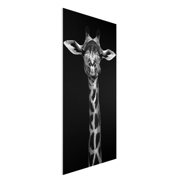 Forex Fine Art Print - Dunkles Giraffen Portrait - Hochformat 2:1