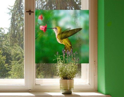 Fensterfolie - Sichtschutz Fenster Kolibri und Blüte - Fensterbilder