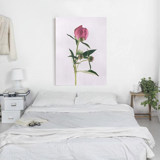 Leinwandbild - Pfingstrose Pink auf Weiß - Hochformat 4:3