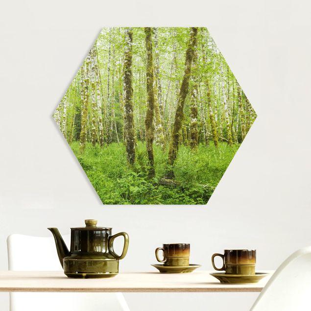 Hexagon Bild Forex - Hoh Rainforest Olympic National Park