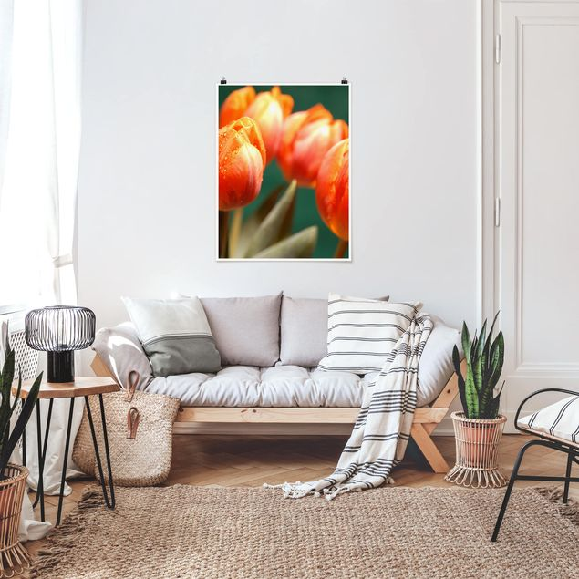 Poster - Shiny Orange Tulips - Hochformat 3:4