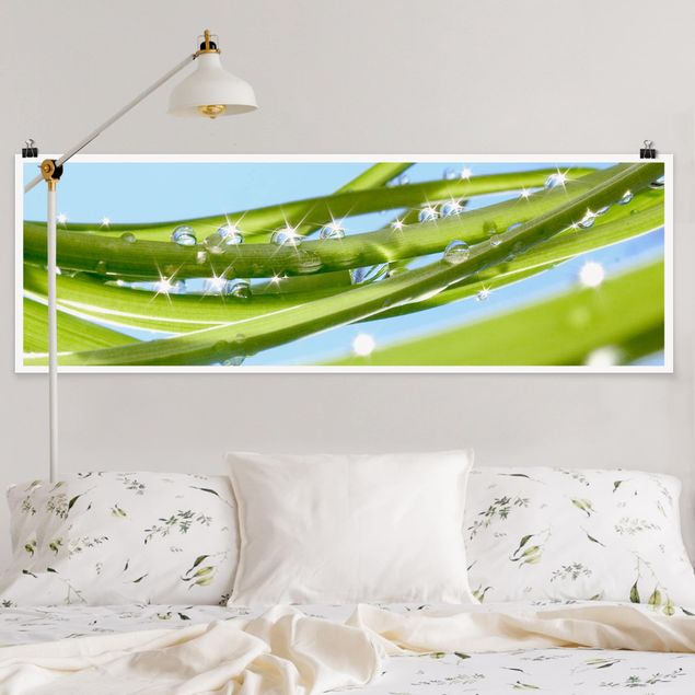 Poster - Fresh Green - Panorama Querformat