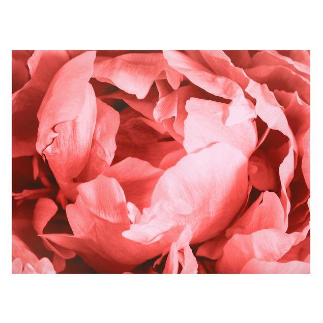 Magnettafel - Pfingstrose Blüte Koralle - Memoboard Querformat 3:4