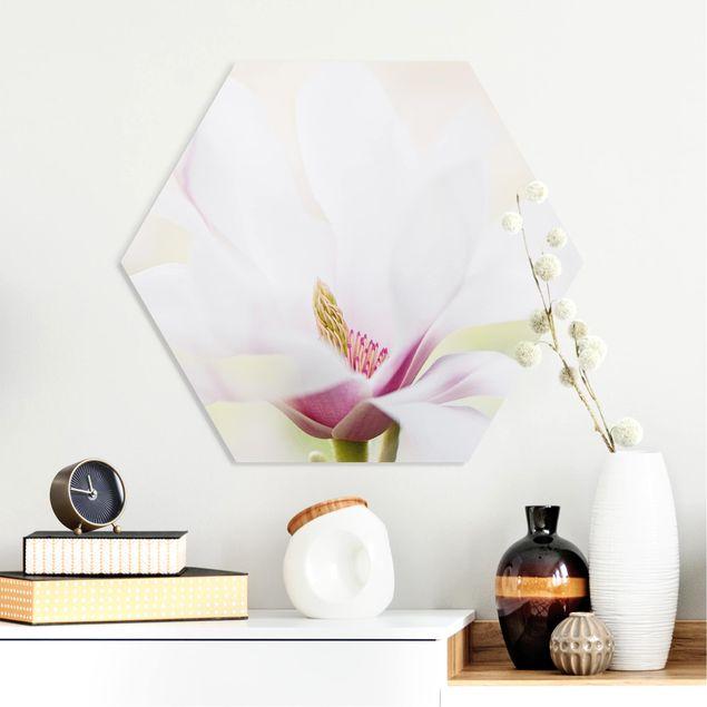Hexagon Bild Forex - Zarte Magnolienblüte