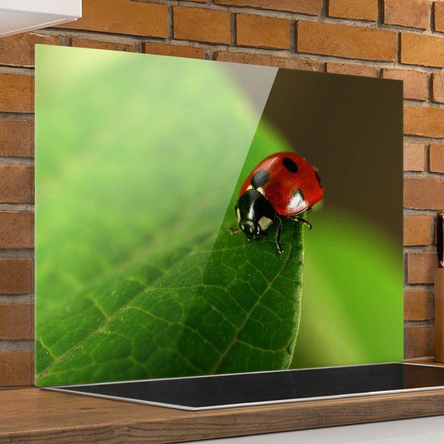 Glas Spritzschutz - No.SF751 Familie Ladybird II - Querformat - 4:3