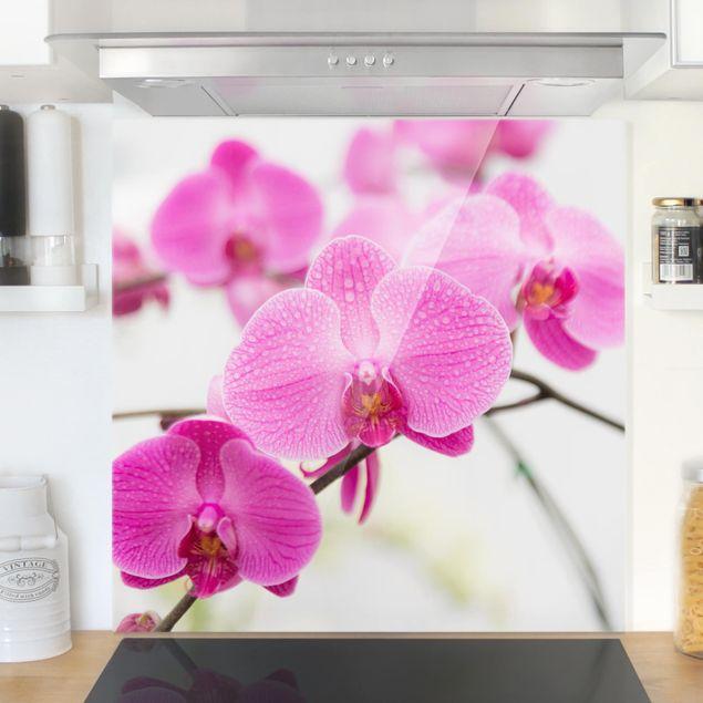 Glas Spritzschutz - Nahaufnahme Orchidee - Quadrat - 1:1