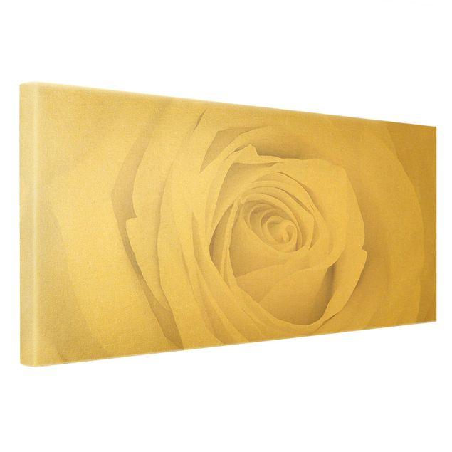 Leinwandbild Gold - Pretty White Rose - Querformat 2:1