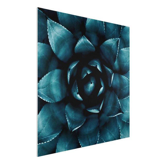 Forex Fine Art Print - Sukkulente Petrol II - Quadrat 1:1