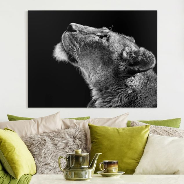 Leinwandbild - Portrait einer Löwin - Querformat 3:4