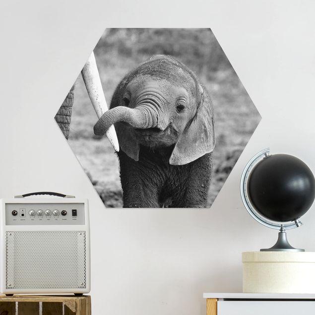 Hexagon Bild Alu-Dibond - Elefantenbaby