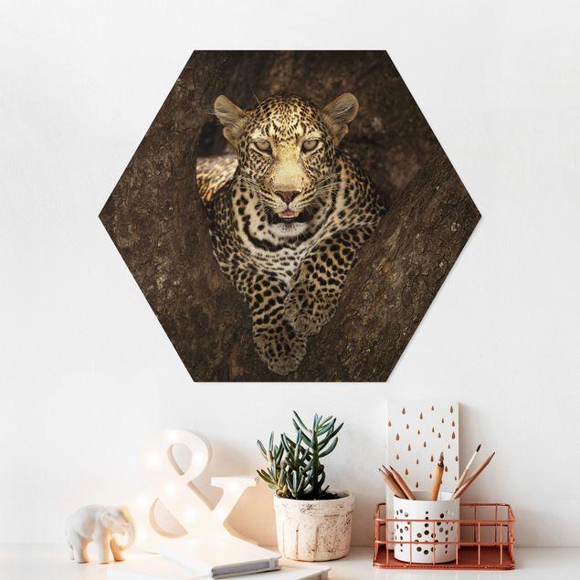 Hexagon Bild Forex - Leopard ruht auf einem Baum