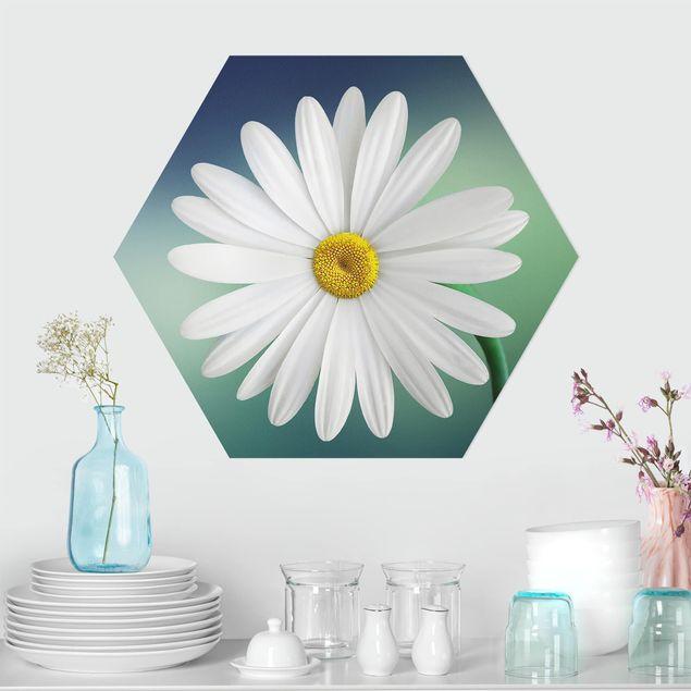 Hexagon Bild Forex - Gänseblümchen Close Up