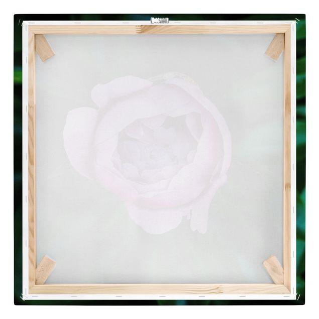 Leinwandbild - Lila Pfingstrosenblüte vor Blättern - Quadrat 1:1