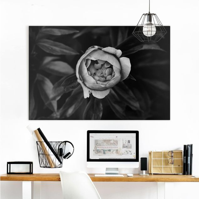 Leinwandbild - Pfingstrosenblüte vor Blättern Schwarz Weiß - Querformat 2:3
