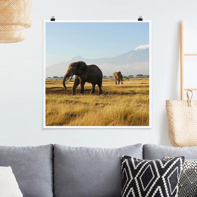 Poster - Elefanten vor dem Kilimanjaro in Kenya - Quadrat 1:1