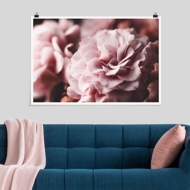Poster - Shabby Rosa Rose Pastell - Querformat 2:3