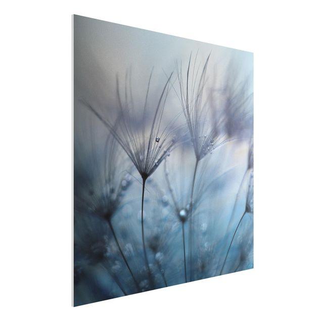 Forex Fine Art Print - Blaue Federn im Regen - Quadrat 1:1