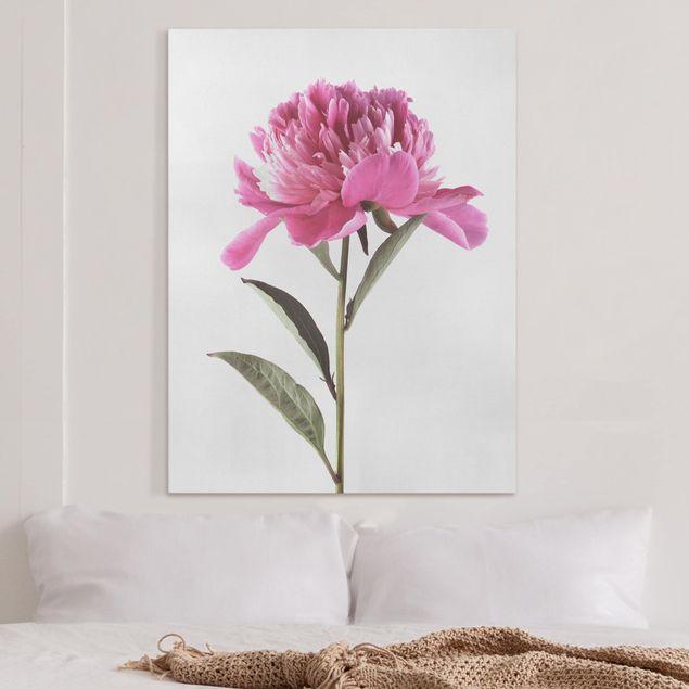 Leinwandbild - Blühende Pfingstrose Pink auf Weiß - Hochformat 4:3