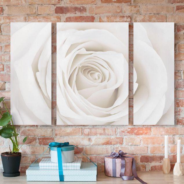 Leinwandbild 3-teilig - Pretty White Rose - Triptychon