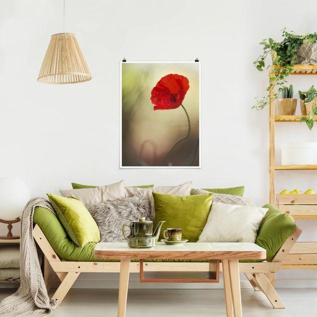Poster - Mohnblüte im Garten - Hochformat 3:4