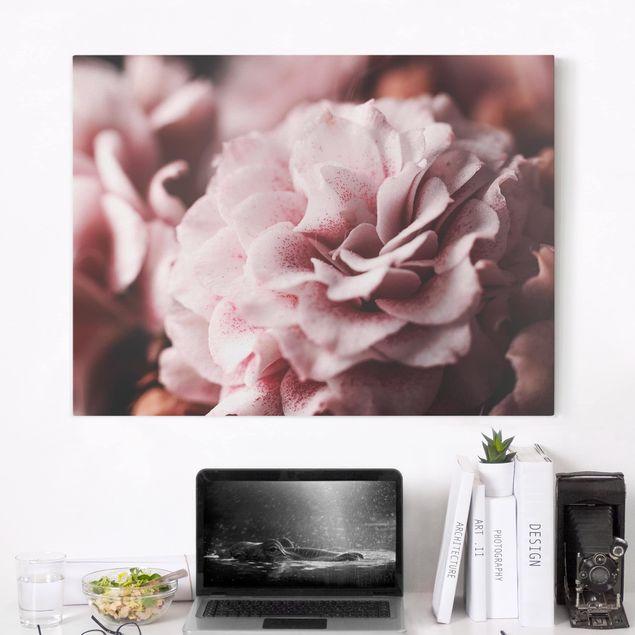 Leinwandbild - Shabby Rosa Rose Pastell - Querformat 3:4