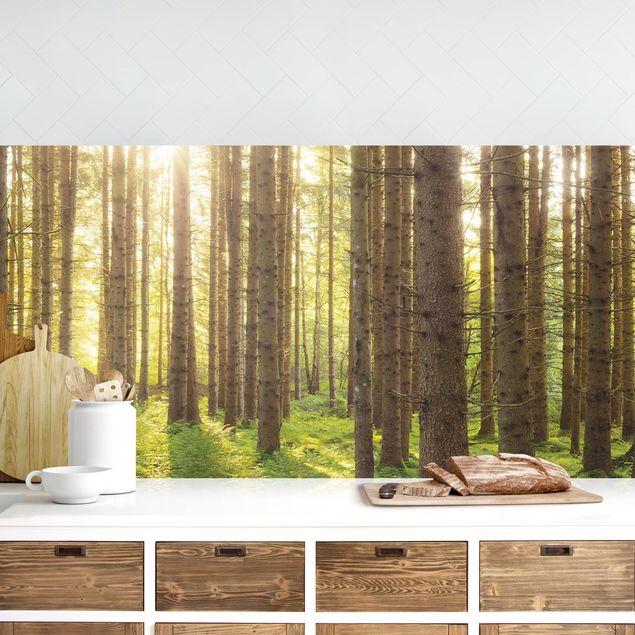 Küchenrückwand - Sonnenstrahlen in grünem Wald