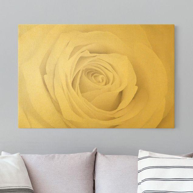 Leinwandbild Gold - Pretty White Rose - Querformat 3:2