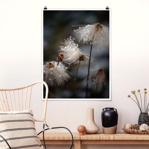 Poster - Pusteblumen mit Schneeflocken - Hochformat 3:4