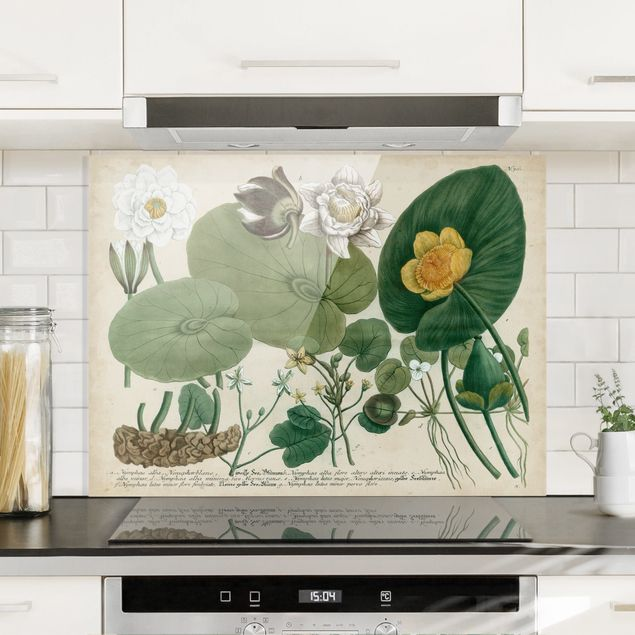 Glas Spritzschutz - Vintage Illustration Weiße Wasserlilie - Querformat - 4:3