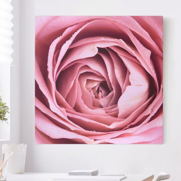 Leinwandbild - Rosa Rosenblüte - Quadrat 1:1