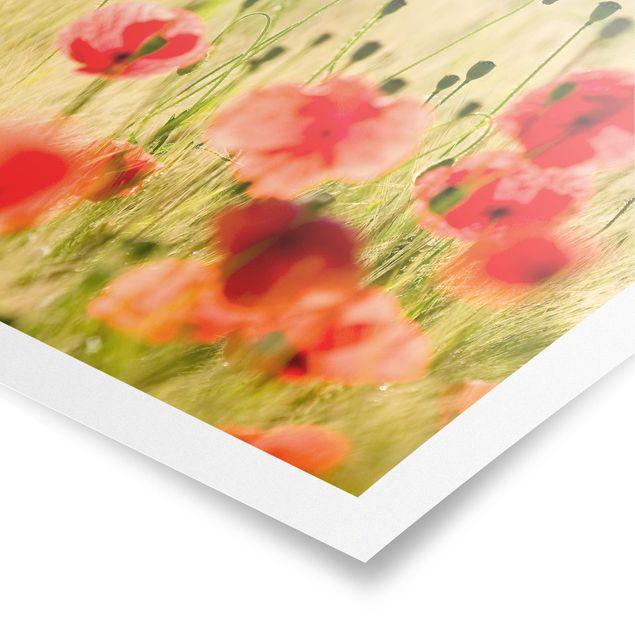 Poster - Summer Poppies - Hochformat 3:4