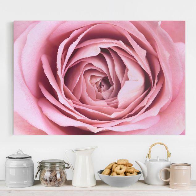 Leinwandbild - Rosa Rosenblüte - Querformat 2:3