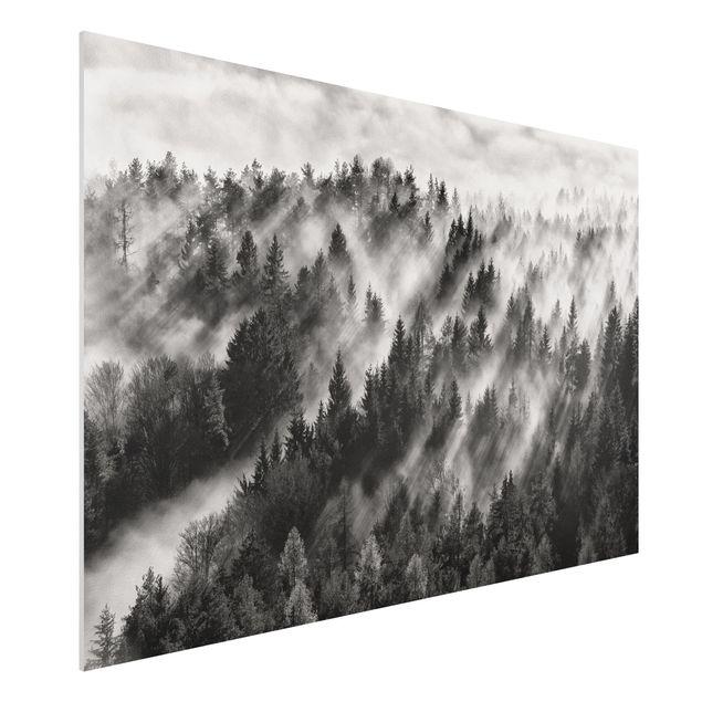 Forex Fine Art Print - Lichtstrahlen im Nadelwald - Querformat 2:3