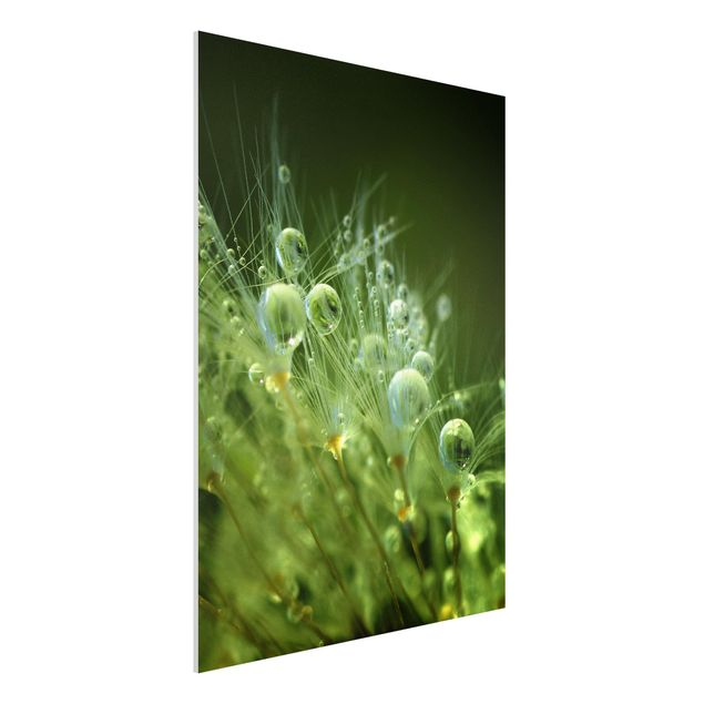 Forex Fine Art Print - Grüne Samen im Regen - Hochformat 4:3