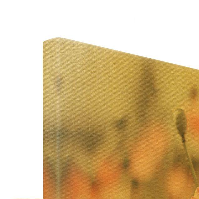 Leinwandbild Gold - Sonnengeküsste Mohnfelder - Querformat 3:2